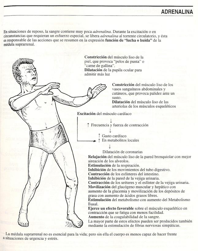 Etiqueta: Anatomía - Síntesis