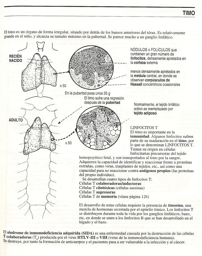 Anatomía: Glándula Pineal. Líquido cefalorraquídeo,Anatomía ...